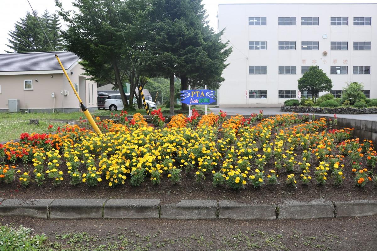 第30回花いっぱいコンクール受賞花壇(平成29年度)