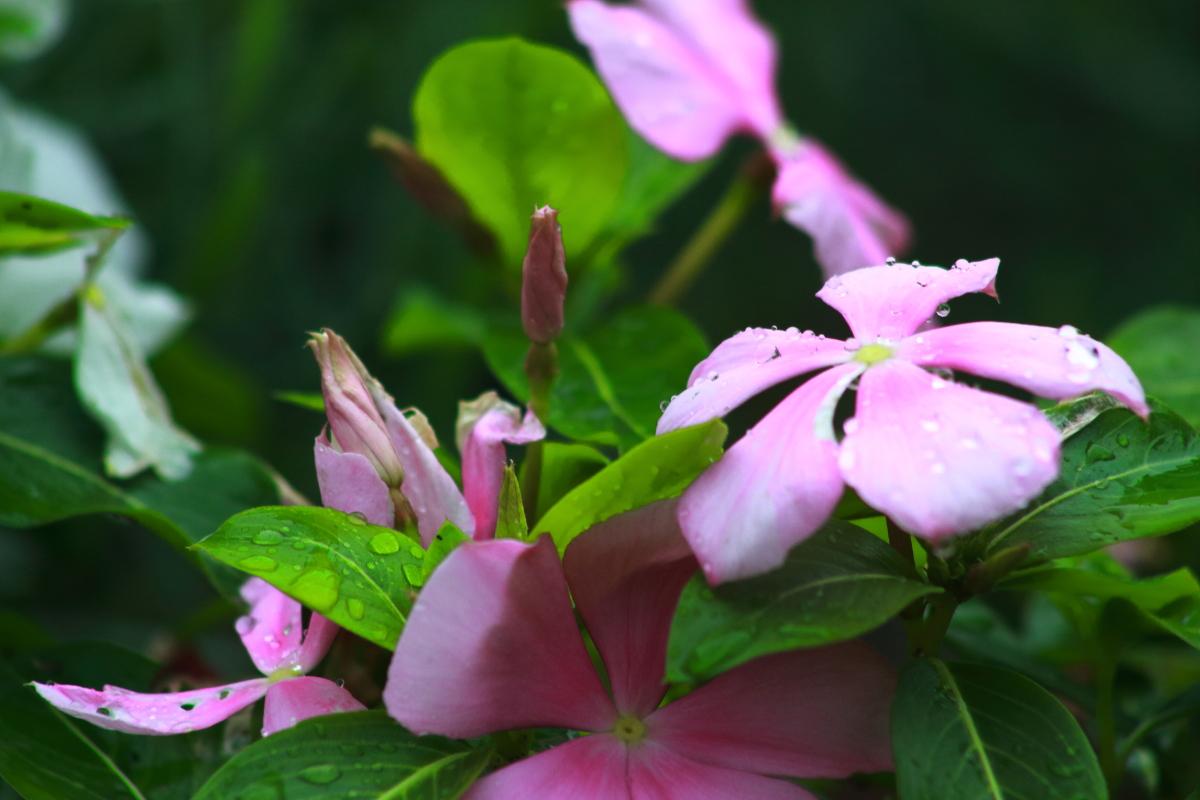 第13回花と緑の写真コンテスト受賞作品(平成30年度)