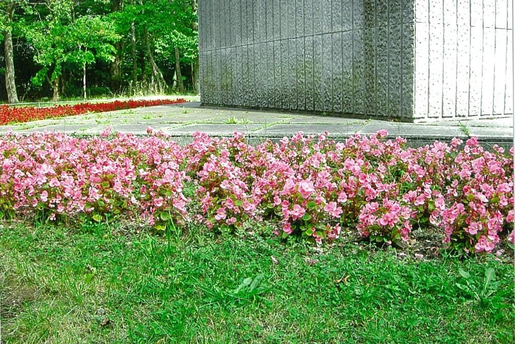 第12回花と緑いっぱい写真コンテスト受賞作品(平成29年度)