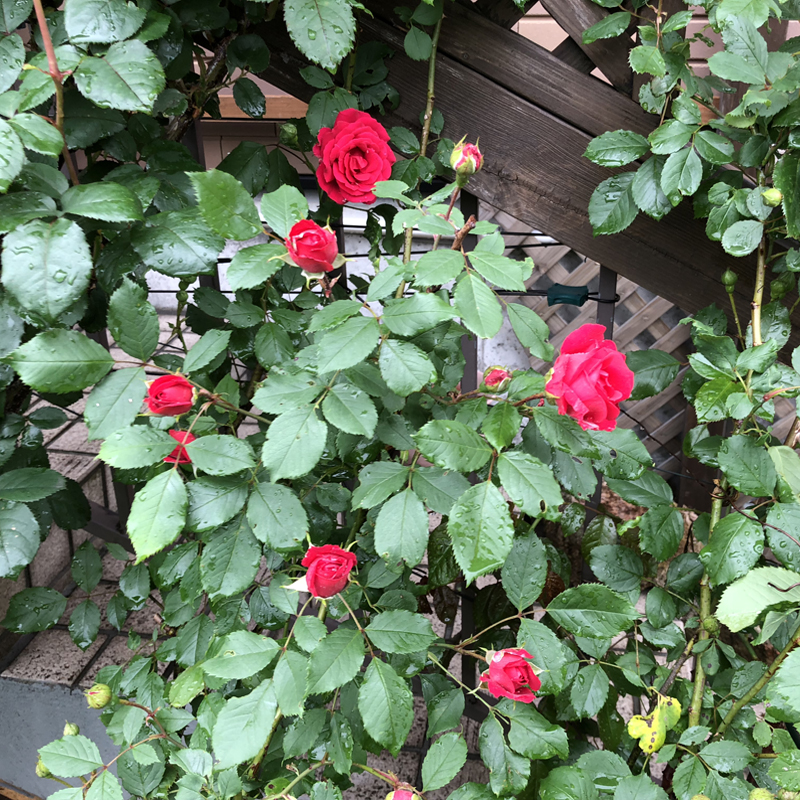 自然な雰囲気の庭づくり