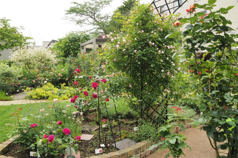 野鳥が遊びに来る秘密の花園