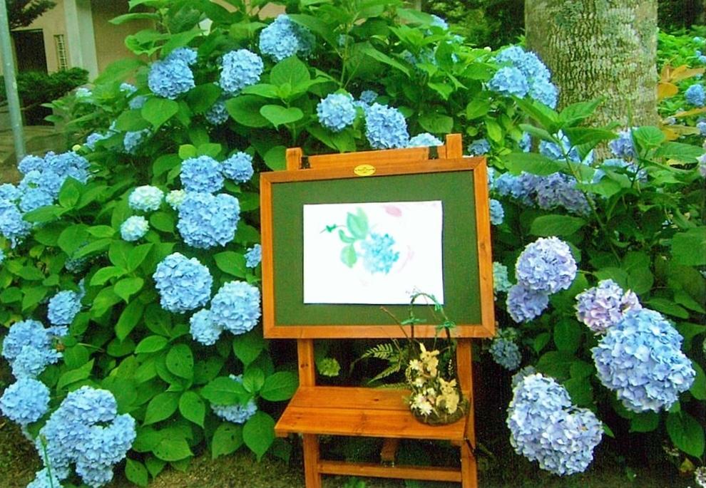 アジサイの花が咲くお庭