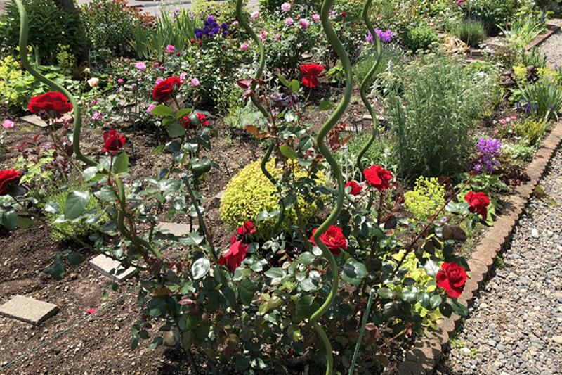 私(80歳)のお庭