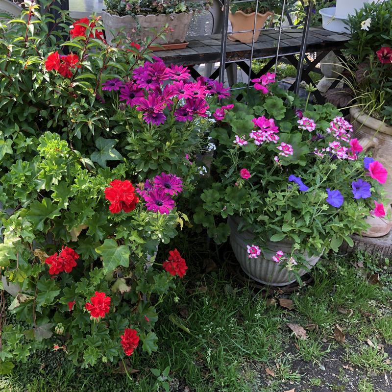 広々とした空間の花畑