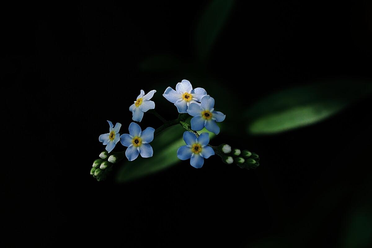 第16回花と緑の写真コンテスト受賞作品(令和3年度)